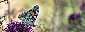 Leacock - Verano en mariposa
