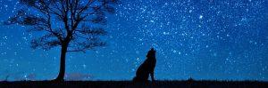 dog at midnight