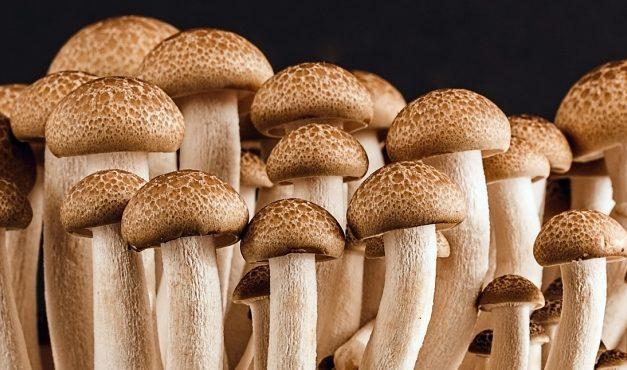 Albert Sánchez Piñol: Fungus